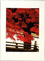 Hideaki Kato born 1954 - Red Maple