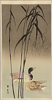 Shoun Yamamoto 1870-1965 - Mallard Ducks and Reeds