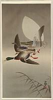 Koson Ohara 1877-1945 - Two Mallards