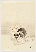 not identified - Puppies