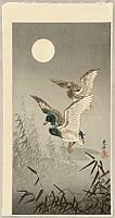 Koitsu Tsuchiya 1870-1949 - Two mallards