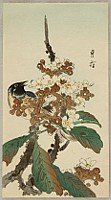 Gesso Yoshimoto 1881-1936 - Bird on a Blooming Branch