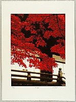 Hideaki Kato born 1954 - Red Maple