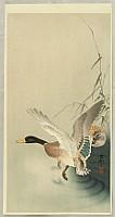 Koson Ohara 1877-1945 - Mallard Flying from a Pond