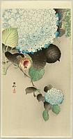 Koson Ohara 1877-1945 - Sparrow on Hydrangea