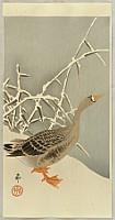 Koson Ohara 1877-1945 - Goose and Reeds