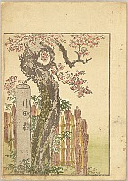 Hokusai Katsushika 1760-1849 - Pleasure of the East - Azuma Asobi - Komachi Cherry Tree