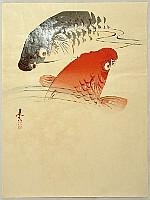 Zeshin Shibata 1807-1891 - Carp