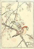 Keinen Imao 1845-1923 - Keinen Gafu - Spring No.4.   Crossbills