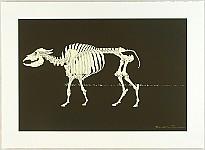 Hideo Takeda born 1948 - Altamira - Buffalo