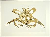 Hideo Takeda born 1948 - Altamira -  Bullfrog