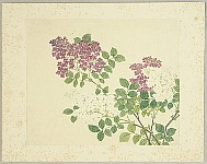 Unknown - Purple and white Flowers - hand painted watercolors