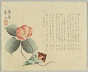 not identified - Camellia - surimono