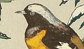 Toshi Yoshida 1911-1995 - Birds of the Seasons - Winter