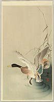 Koson Ohara 1877-1945 - Mallard Flying from a Pond