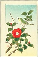 Shizuo Ashikaga 1917-1991 - Bush Warbler and Camellia
