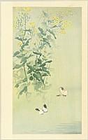 Seitei (Shotei) Watanabe 1851-1918 - Butterflies and Yellow Flower